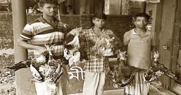 হাঁস-মুরগি উল্টো করে ঝুলিয়ে নিয়ে যাওয়া আইনত দন্ডনীয়