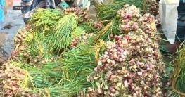 বগুড়ায় আগামজাতের সবজির বাম্পার ফলন