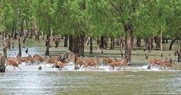 Bangladesh On Path Of Asian Tigers