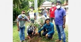 দুপচাঁচিয়ায় টাউন বারোয়ারী ক্লাবের উদ্যোগে বৃক্ষরোপন