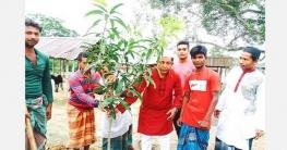 বগুড়া শাজাহানপুরে যুবলীগ নেতা ইনোকী'র উদ্যোগে বৃক্ষ রোপণ