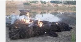 সারিয়াকান্দিতে বাঙ্গালী নদী থেকে অবৈধ জাল জব্দ