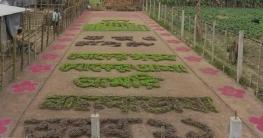 ফসলের মাঠে কৃষকের প্রাণের শহিদ মিনার