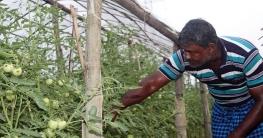 শিবগঞ্জে নিরাপদ সবজি ও ফল উৎপাদন প্রশিক্ষণ কর্মশালা