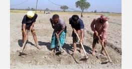 দুপচাঁচিয়ায় আলু রোপণে ব্যস্ত কৃষক