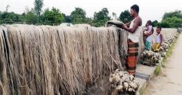 শেরপুরে কৃষকের মুখে হাসি ফুটিয়েছে সোনালী আঁশ পাট