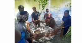 বগুড়ায় ভ্রাম্যমাণ আদালতের অভিযানঃসরকারি ৩পুকুরের ৮৮ কেজি মাছ জব্দ